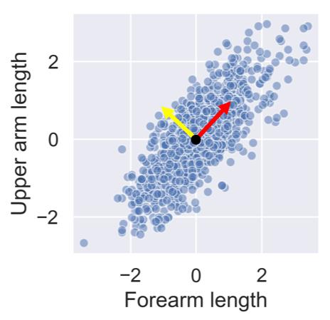 Forearm vs upper arm lengths