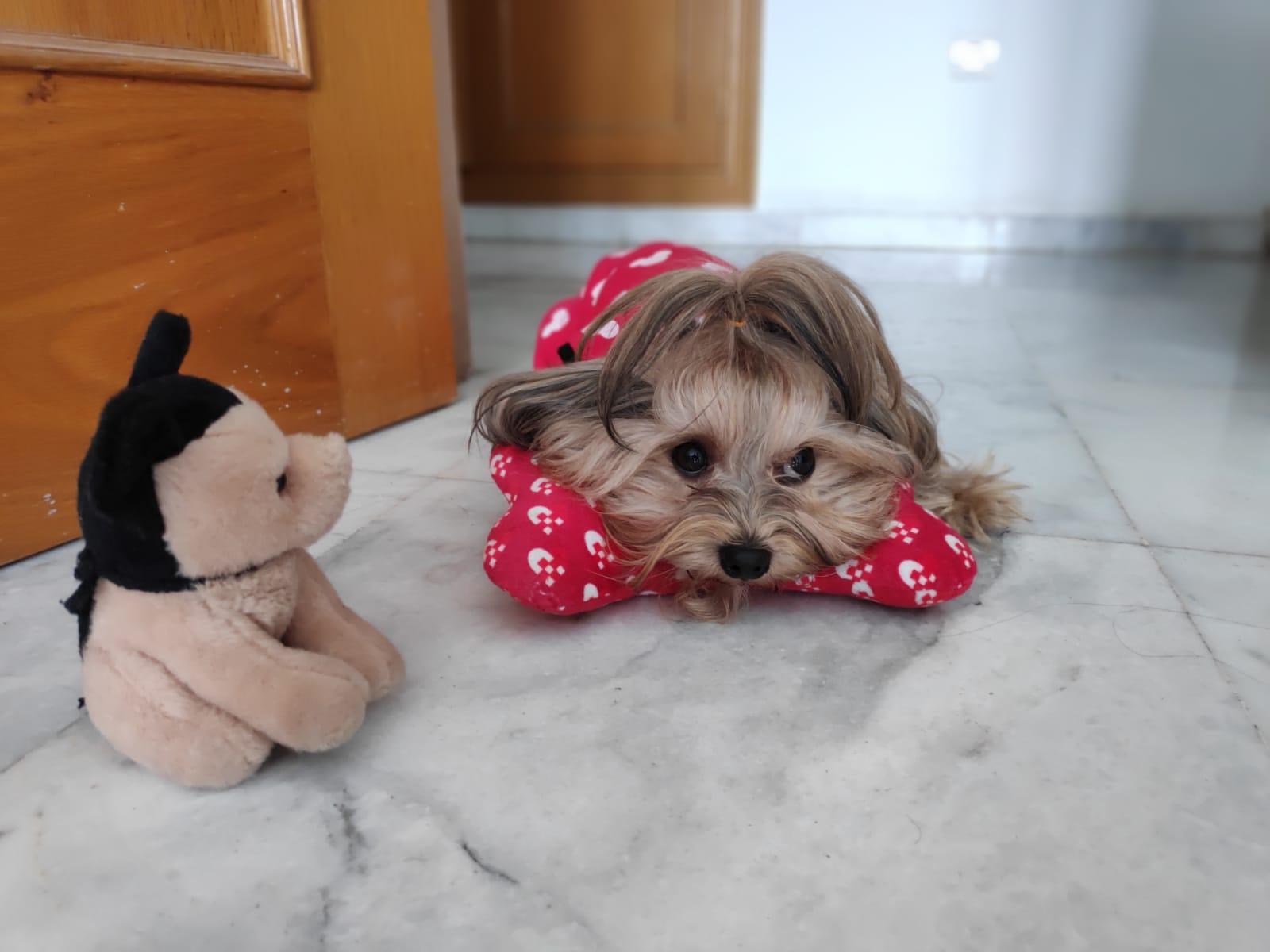 Small cute puppy